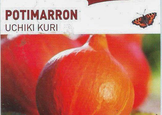 Potimarron Uchiki Kuri