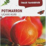 Potimarron Uchiki Kuri - botanic® - dzprod Jardin