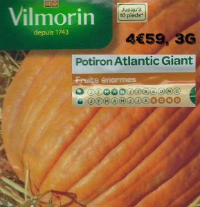 Potiron Atlantic Giant - 200kg par fruit - vilmorin