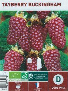 Tayberry Buckingham - botanic® - dzprod jardin