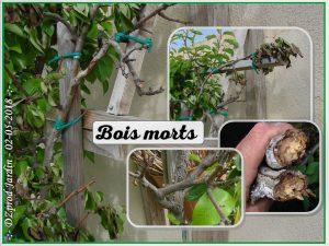 bois morts sur charpentière poire williams - dzprod jardin - 02-05-2018