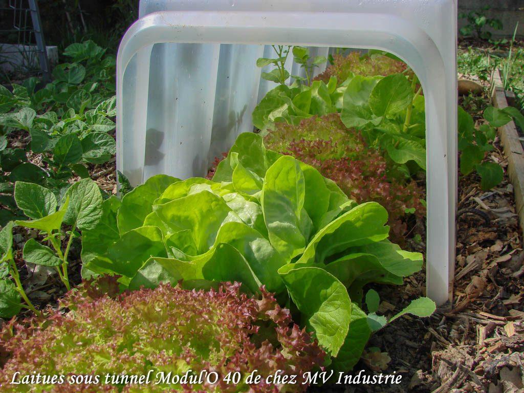 forcer vos salades tunnel modulo 40 - DZprod Jardin