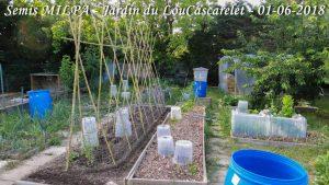 Début MILPA - bande A - jardin du Lou Cascarelet - 01-06-2018