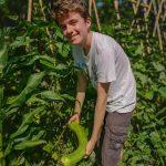 La récolte Antoine courge longue de Nice - Jardin du LouCascarelet - bande A - 24-07-2018