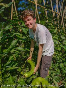 La récolte Antoine courge longue de Nice - Jardin du LouCaszcarelet - bande A - 24-07-2018