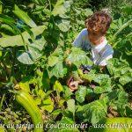 Récolte Antoine haricot Melisa - Jardin du Lou Cascarelet - bande A - 24-07-2018