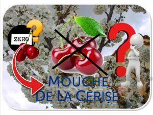 cerisier hatif pour éviter la mouche de la cerise - dzprod Jardin ®2018