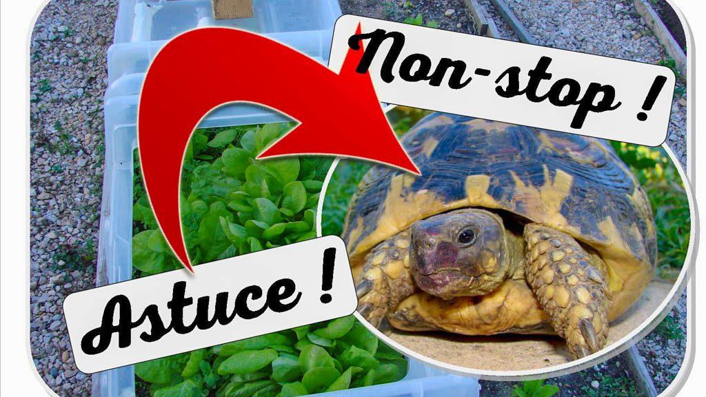 emploi modulo 60 pendant été - nourrir les tortues - dzprod Jardin