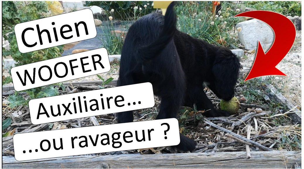 Orus - chien woofer auxiliaire ou ravageur - dzprod Jardin - aout 2018