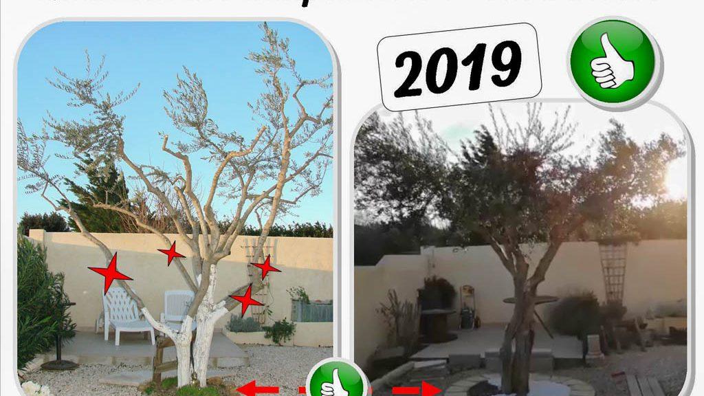 olivier devant la maison en 2019 - tour arbre - dzprod jardin