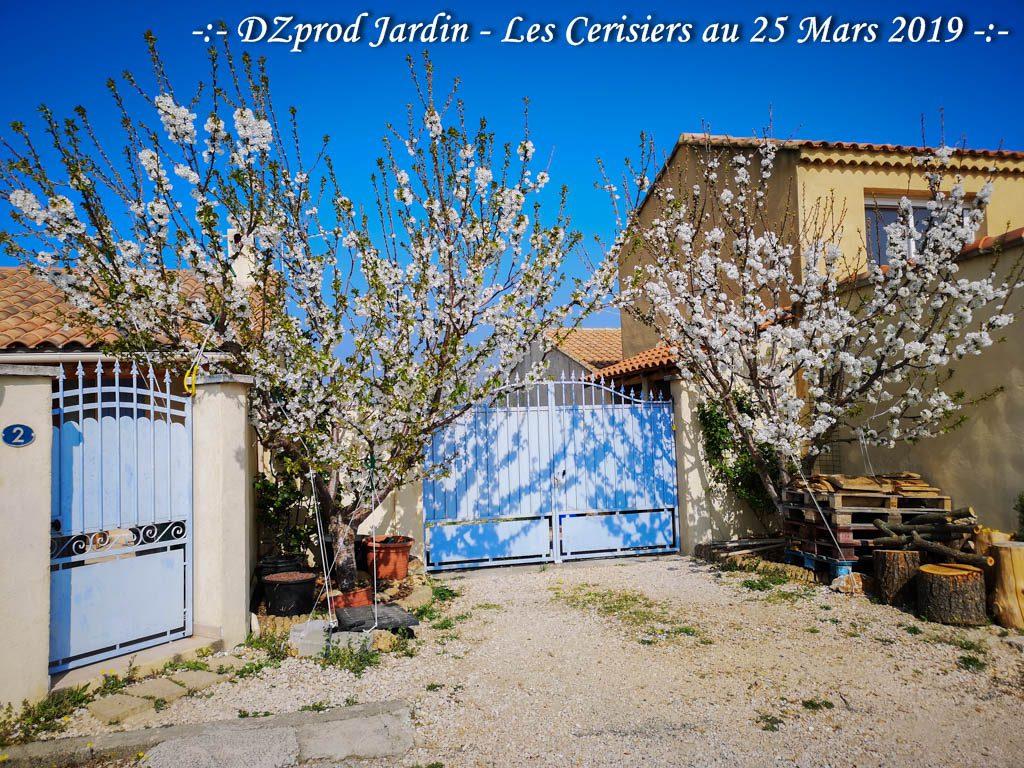 Cerisiers au 25 mars 2019 -DZprod Jardin