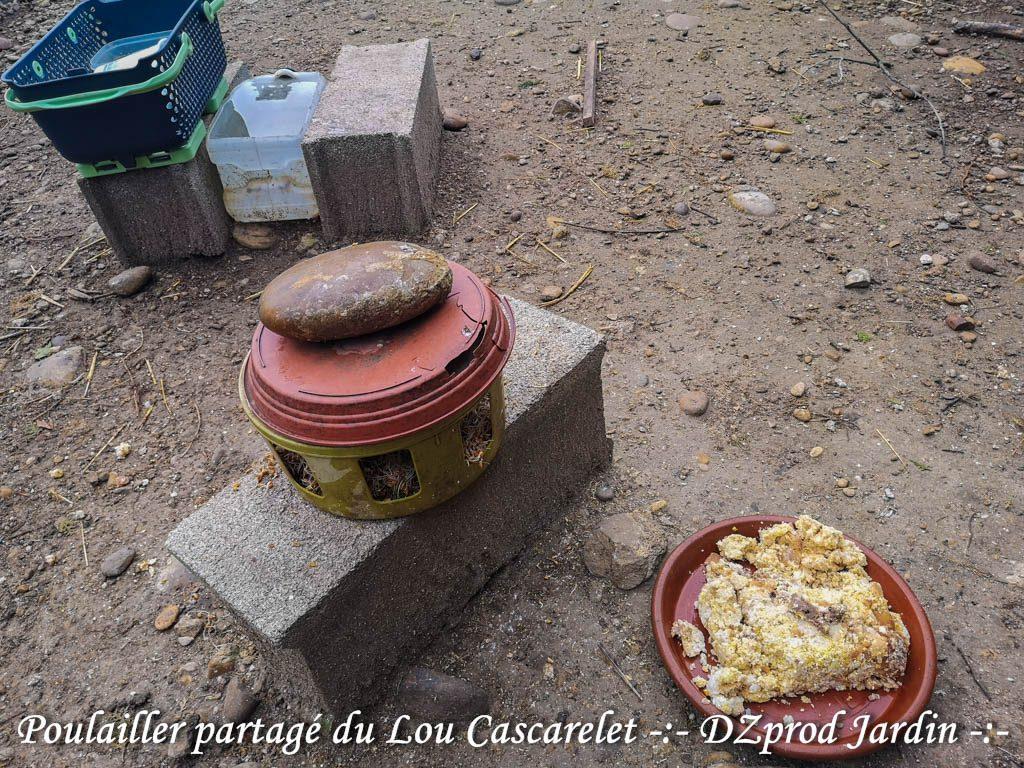 blé germé et pain mouillé en plus du mélange bassecour - DZprod jardin -
