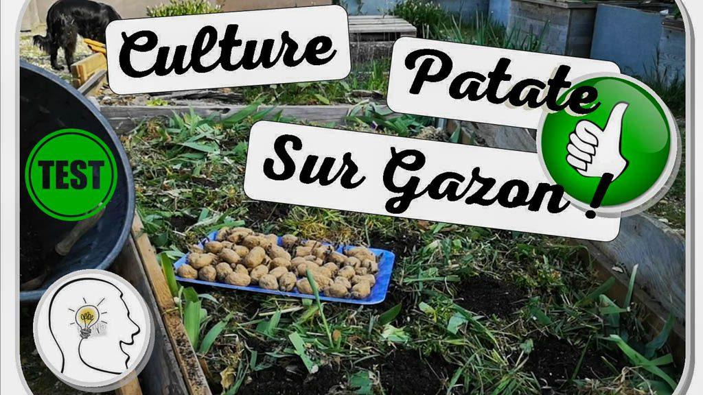 culture de pomme de terre sur gazon - dzprod jardin - association la JARRE Écocitoyenne - jardin urbain du Pébrier