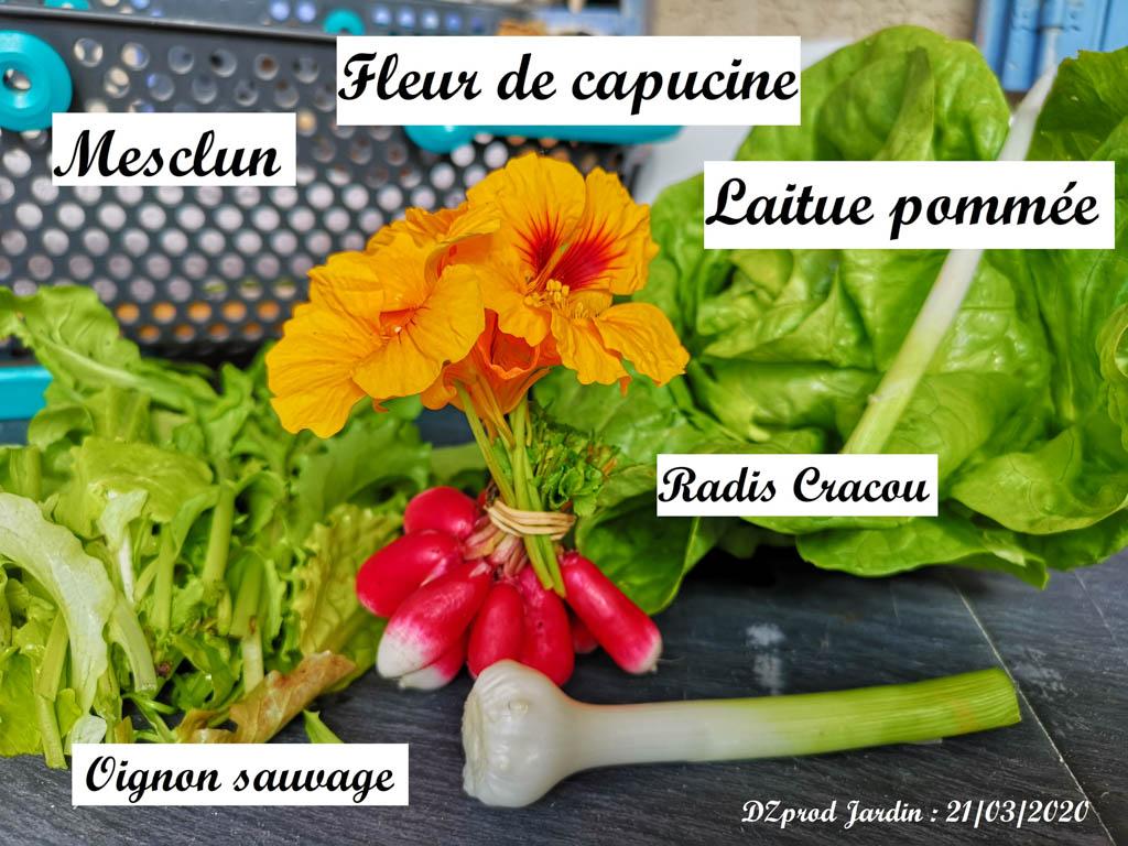 Récolte DZprod Jardin du 21 Mars 2020 (covid printemps)