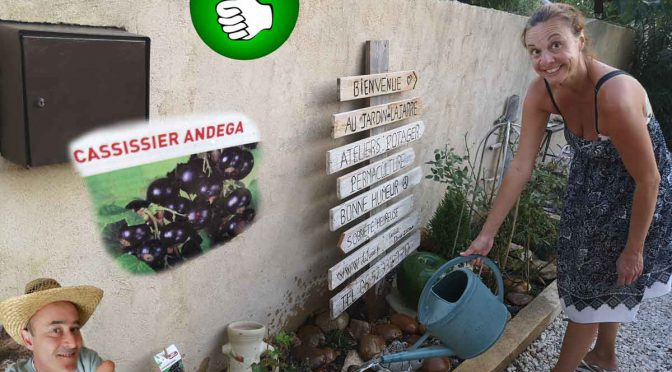 Cassissiser Andega à la place de la sauce arbustive