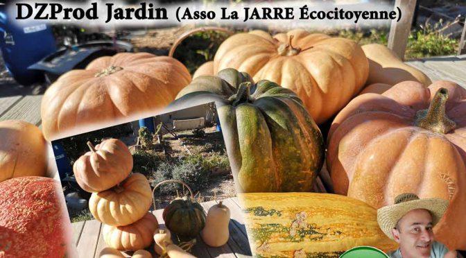 Cucurbitacées : Récolte 2020 au jardin de DZprod
