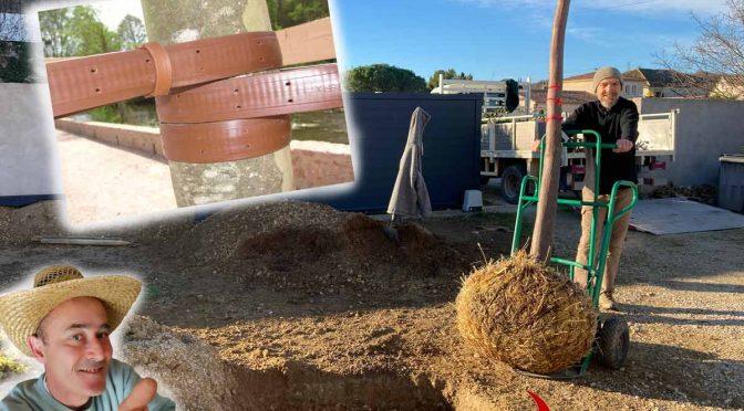 Aide à la mise en place d'arbre et arbuste chez Julien D