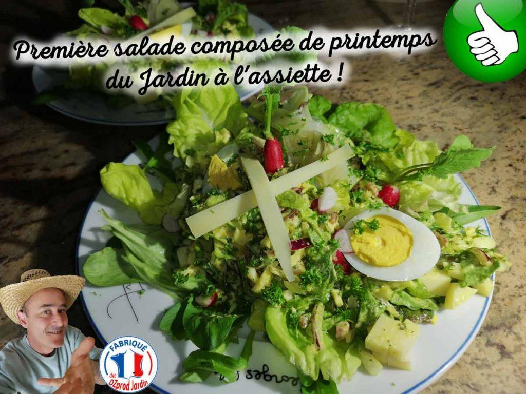 salade-de-printemps-du-08-mars-2021-Dzprod-Jardin