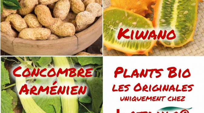 Plant potager originaux au jardin bio ! (nouvelle variété – les originales chez botanic®)