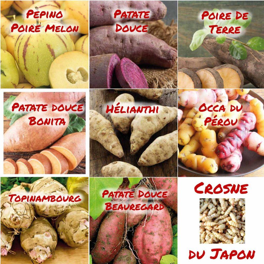 botanic®_originales_occa_crosne_patate-douce