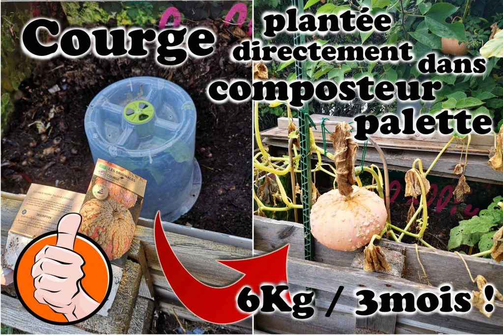 Courge plantée directement dans composteur - jardin urbain du Pébrier- association la JARRE pour botanic®